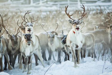 Ny samisk temapark i Funäsfjällen