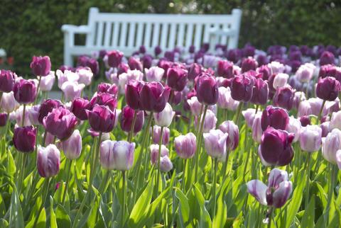 Suomalaisten suosivat yhä enemmän omatoimista hyötyviljelyä niin parvekkeella kuin puutarhassa – vuonna 2020 myös leikkokukkien kasvattaminen on nousussa