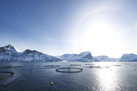 Norvège : le succès des produits de la mer ne se dément pas ; en 10 ans, les exportations norvégiennes ont plus que doublé