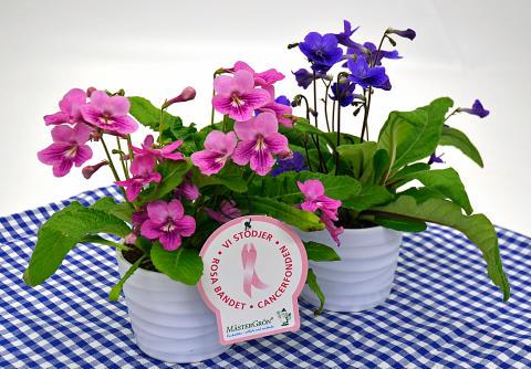 Dagens Rosa Produkt 21 oktober - en Kornettblomma från Mäster Grön