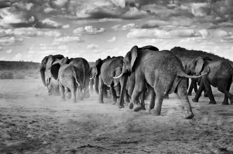The Poaching Wars visas för första gången i USA