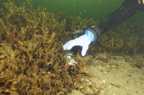 Skräpet ska upp till ytan på Aquaria