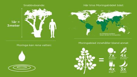 Grafik Moringaträdet