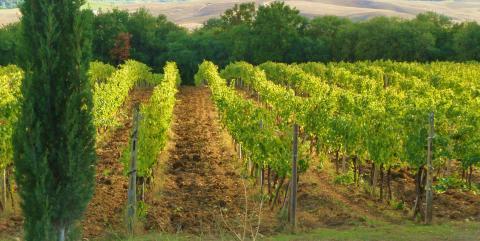Col d´Orcia - vinodlingar i Toscana