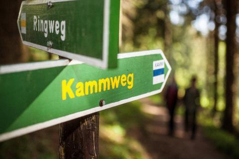Kammweg Erzgebirge Vogtland