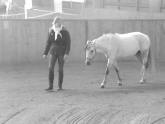 Låt hästen coacha chefen