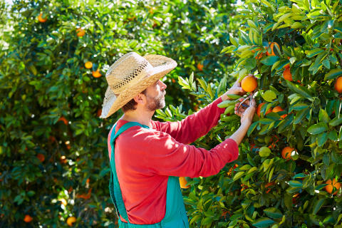 Appelsiinin talvisato aiheena Ylen Luonto lähellä -ohjelmassa