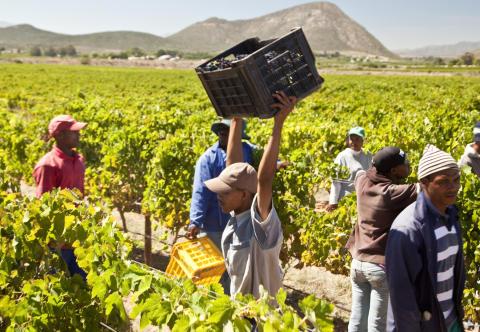 Dra inte hela Sydafrika över en kam