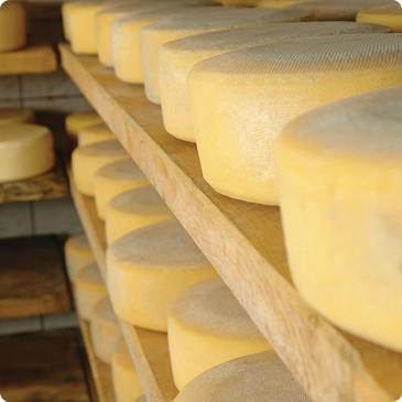 Nutrilac® FastRipe opens door to huge savings for cheese producers