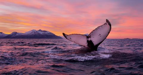 Китовое фотосафари