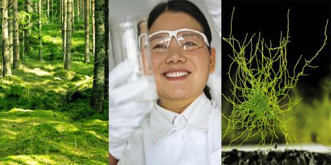Förnybara material för svensk industri