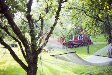 Rødt_hus_med_tre Foto Christina Sundien_Scandinav_NTB Scanpix