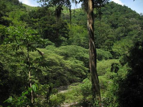 Verdens Skove får sit første EU-projekt
