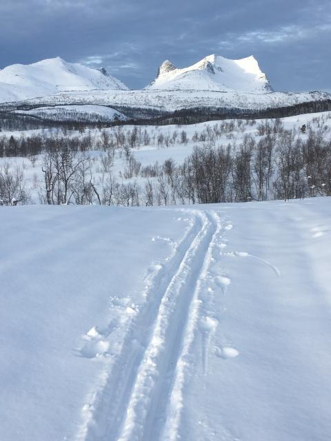 Skispor til Sætervatnet, Sjunkhatten Nasjonalpark Foto: Tore Veisetaune