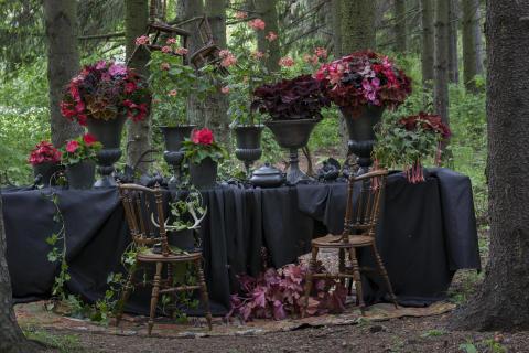 Dark Forest 5