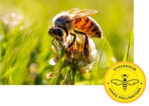 Plantagen ställer sig bakom initiativ för att främja en pollinerarvänlig Nationalstadspark
