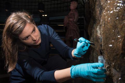 Helt nya svamparter upptäckta – i Stockholms t-bana