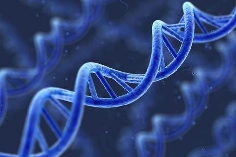 Whole Exome Sequencing Market Latest Advancements and Demand Analysis 2019-2027 Profiling GENEWIZ, Bio-Rad Laboratories, Eurofins Scientific, Stratos Genomics and other Leading Companies