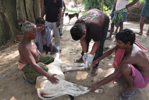 Soforthilfe für die Opfer der Fluten in Odisha (Indien).
