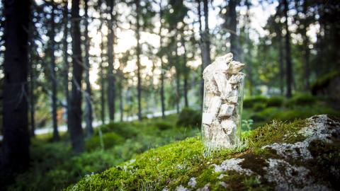 Single cell protein i skog
