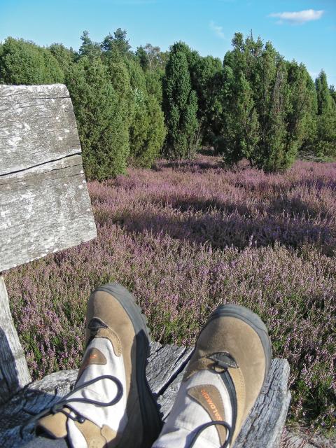 Pilgrimsruten Jakobusweg Lüneburger Heide indgår i et stort net af pilgrimsruter i Europa