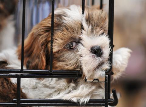 Varning för smuggelhundar!