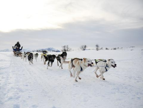 Discount for Arctic Frontiers delegates to explore dog sledding and other winter activities at Tromsø Wilderness Center