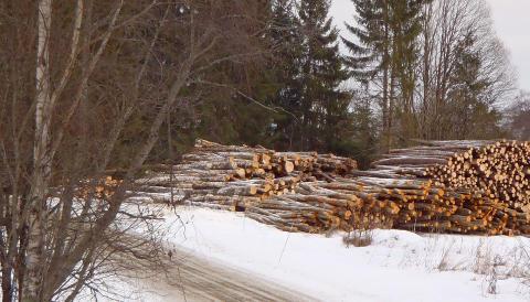 Seminarium: Skogens ekosystemtjänster den 16 mars