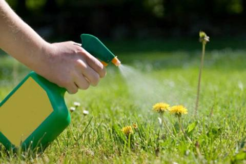 Global Herbicides Market Global Industry Analysis, Size, Share, Growth, Trends and Forecast 2017 – 2022 with top key players like - Syngenta International AG, Bayer AG, BASF SE, DowDuPont Inc., ICL, Agrium Inc and others