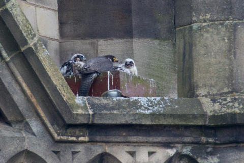 Four new tenants at Rochdale Town Hall