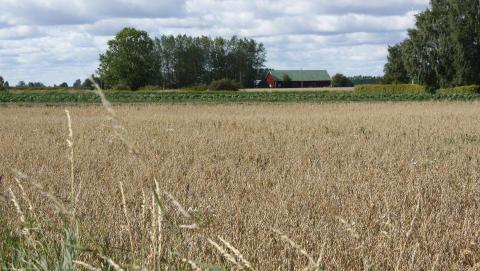 Strategier och beslutsfattande i lantbruket