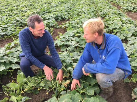 Håkan Tufvesson Sewall, odlingschef på Orkla Foods Sverige, arbetar nära tillsammans med odlarna. Här tillsammans med Nils Jönsson, odlare utanför Lund.