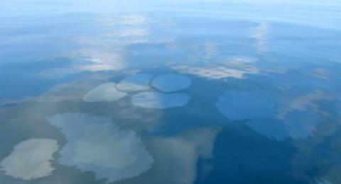 Oil sheen in PNG sea halts loading