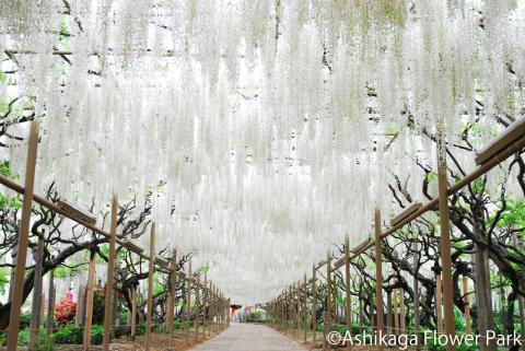 Ashikaga Flower Park(4)