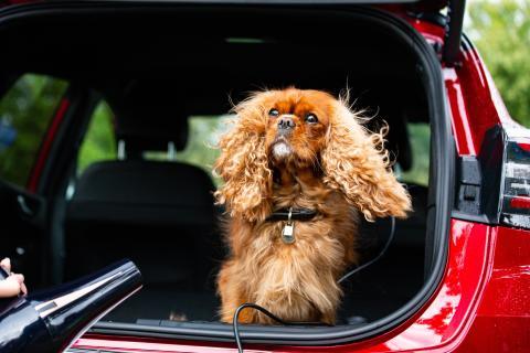 Ford hyllar Alla hundars dag med pop-up-spa – i bagageutrymmet på nya Ford Puma