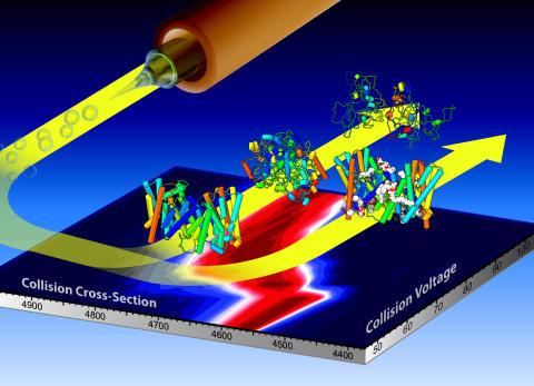 Cellens natriumhiss har både klister och smörjolja