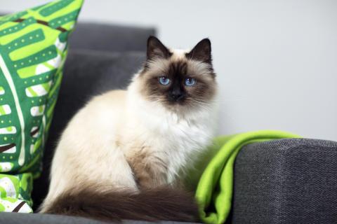 Var rädd om kattens nio liv!