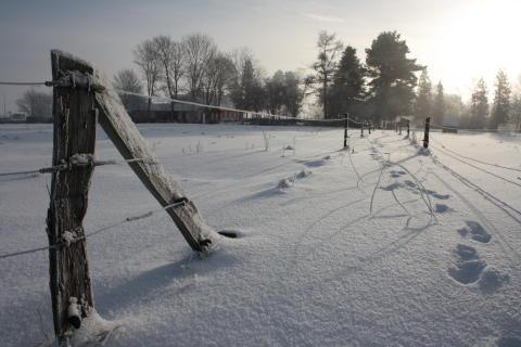 NISSER, HONNINGHJERTER OG JULETRÆER PÅ FREDERIKSSUND MUSEUM