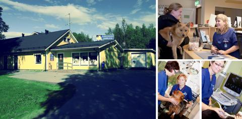 Djursjukhuset Gammelstad blir en del av Evidensia