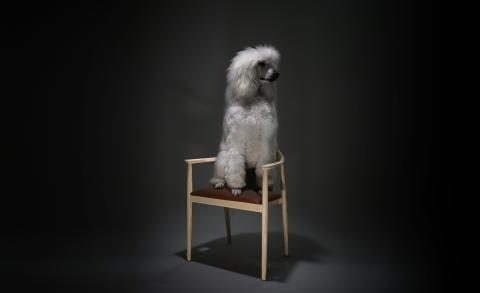 The Seat, Hund Stol 300dpi