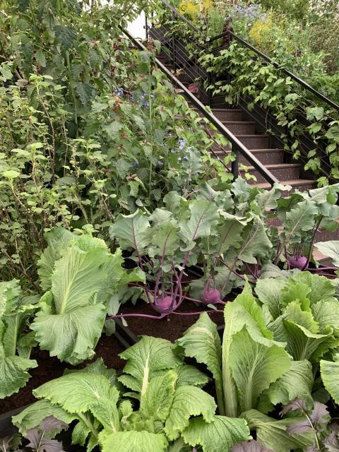 Grönsaksodling på höjden