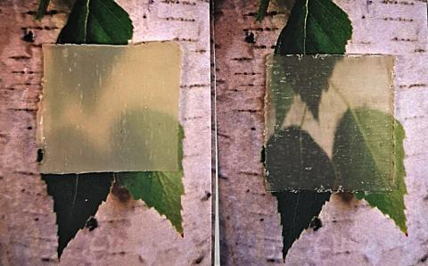 Transparent trä har blivit intelligent