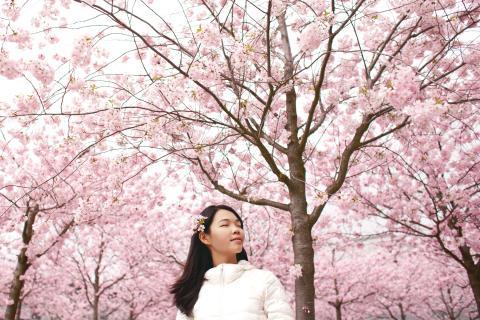 Ny serie i Viridi Eco - Cherry Blossom