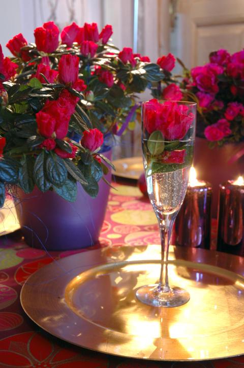 Azalea - en av de sju som ger en fröjdefull jul
