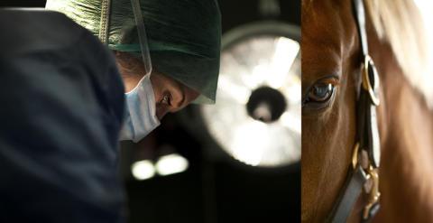Fokus på kvalitet i hästsjukvården - bra för djuren och lägre antibiotikaanvändning