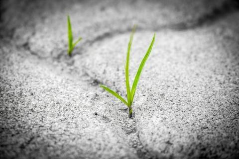 grass-1913167__340