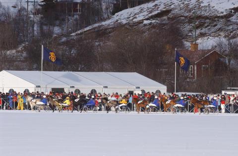 Upplev Häst kommer till Istravet i Åre