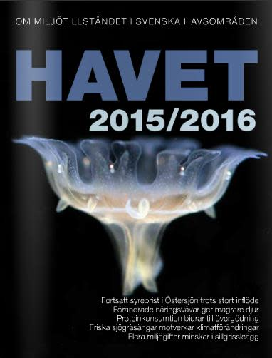 Ny rapport om havet: Mer vildlax i Bottenviken men ålgräset minskar i Västerhavet