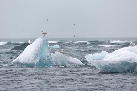 WMO:s klimatrapport inför COP 25: Allvarligt läge för klimatet