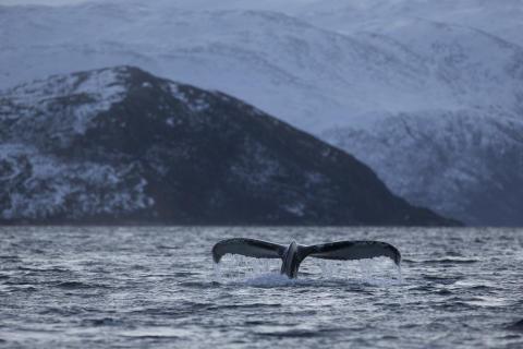 Elever på Sundsgymnasiet berättar om studieresa till Tromsö 15 december